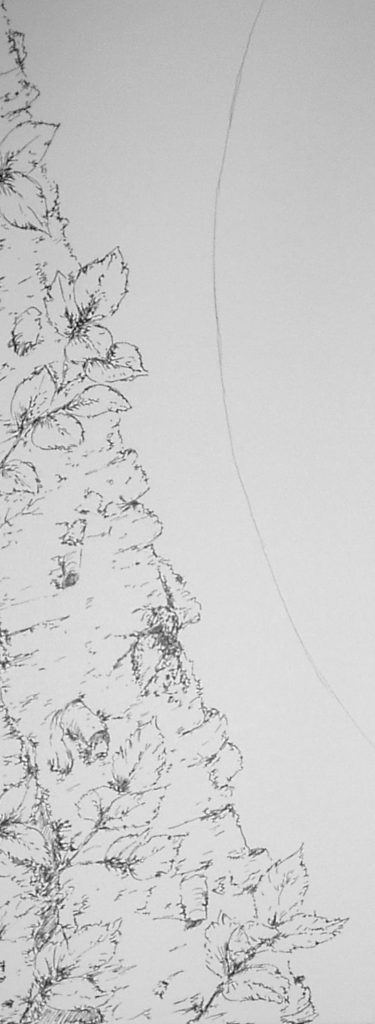 Pen and ink sketch of part of a birch tree trunk and bark